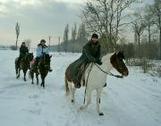 Koníci u Lysé