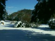 Pohled na část lesoparku v sousedství