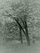 stromy-5