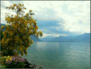 Ženevské jezero IV