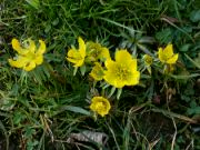 Kvetoucí talovíny: Václav Kovalčík, Zlín