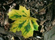 Už je tady podzim