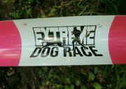 Závody se psy