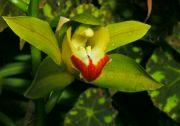Výstava orchidejí 2014