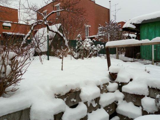 Zimní zahrada 17. ledna 2021 pod sněhem