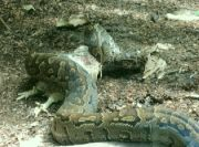 Hadí oběd
