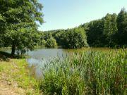 Radošovský rybník