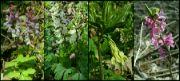Květiny v lese