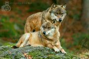 IMG_6543_dva_vlci