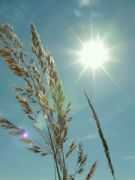 Slunce a tráva