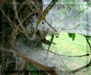 Pavoučí příbytek