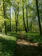 Les u Byšické tůně