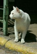 Kočičák nádražní