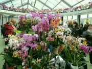 Pavilon orchidejí
