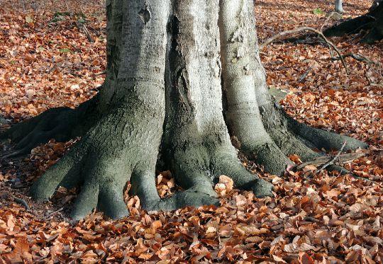 Packy stromu